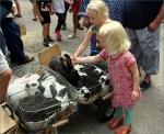 konijnen aaien op de markt in Marcigny