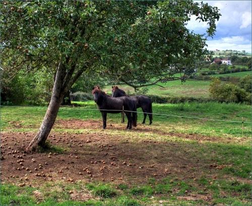 appelpaarden