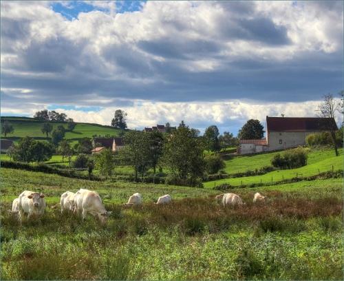 koeienlandschap