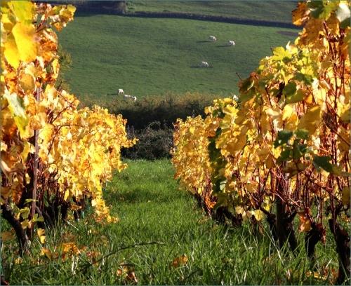 wijngaard Saint Julien de Civry