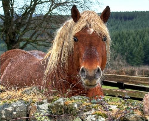 kijkend paard