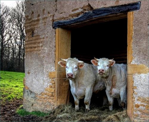 stalkoeien