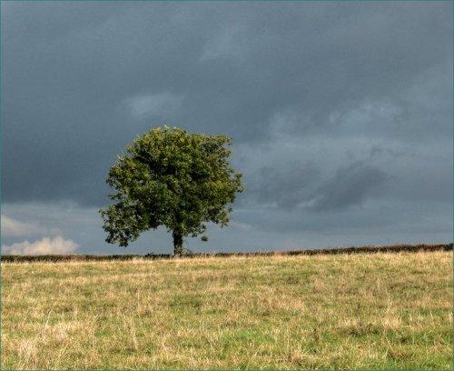 eenzame-boom