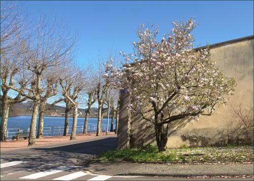 magnolia La Clayette